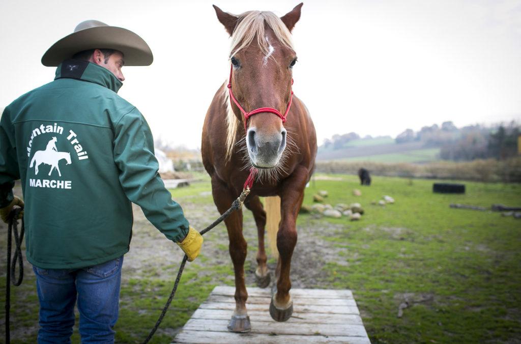 mountain trail marche cavalli (3)